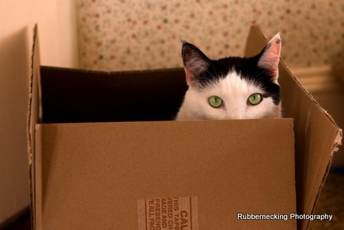 Cal In a Box