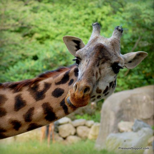 DreamNight Giraffe