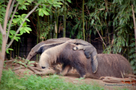 DreamNight Anteater and Baby