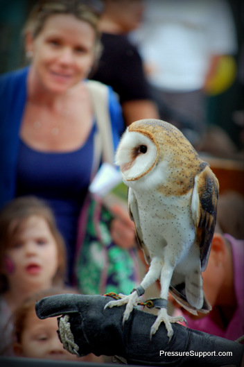 DreamNight Owl watching