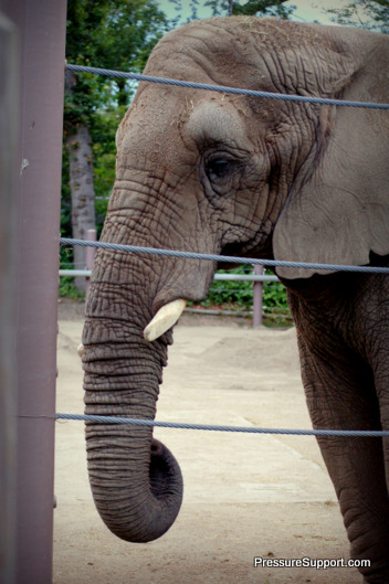 DreamNight Elephant
